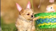 Сладки малки кученца, пиленца и зайчета празнуват Великден