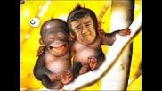 Много Смешни Маймунки