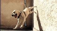 Питбула Tret - Amazing Trick (parkour Dog From Ukraine 2012)