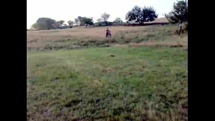 магаре в галоп