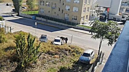 Свободна разходка и паша на коне в квартал