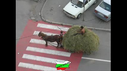 seir.bg - bulgaria