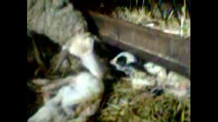 ovca s malkoto si :)