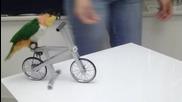 Папагал кара колело xd Смях !!