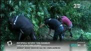 Изгориха четири тона канабис в Благоевград - Здравей, България (25.09.2014г.)