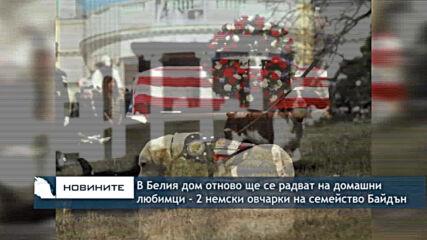 В Белия дом отново ще се радват на домашни любимци - двете немски овчарки на семейство Байдън