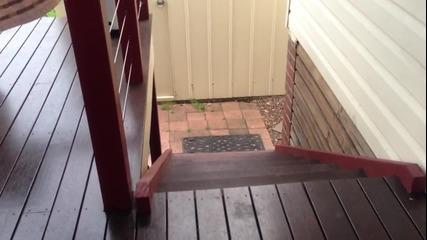 Смешен начин за качване по стълбите...