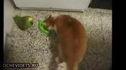 Папагал и котка-''не ме дразни''