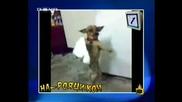 Господари На Ефира - Куче Играе Хоро !