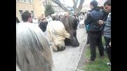 Елешница-гоцето и Гошката -2012