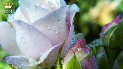 Любимите цветя на кралското семейство