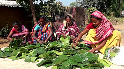 Disposable plates made from leaves empower women in India's Odisha state