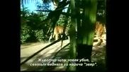 slonyt moqt priqtel indiiski 4