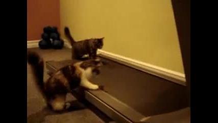 Спортуващи котки - ще се смеете много