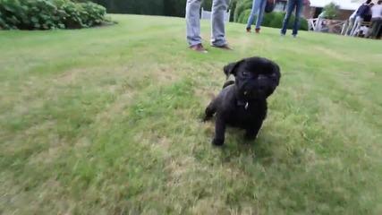 Голяма игра падна с това куче )