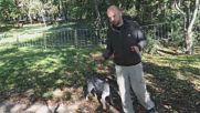 Как да науча кучето си да не дърпа на каишка