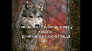 Вълчица-wolf Howls-wolf's Song