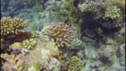 """Подводни срещи на Малдиви (""""Без Багаж"""" еп. 84)"""