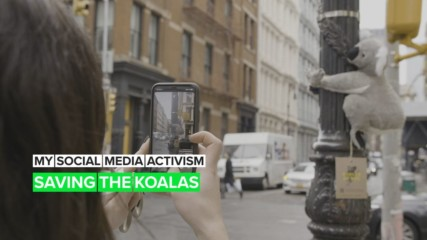 The story behind the 'wild' toy koalas taking over New York City