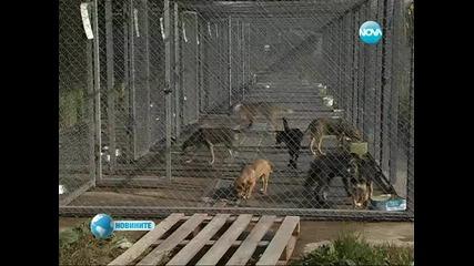 Куче избяга от стопаните си, за да отиде в приют
