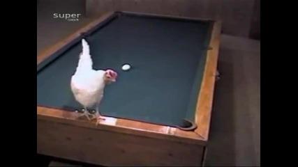 Кокошка играе Билярд
