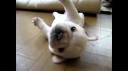 Малко кученце се мъчи да се обърне по корем смях