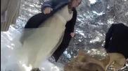 Младоженци поставят камера върху кучето си, за да снима сватбата им
