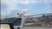 Супер куче