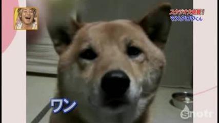 Куче контролира силата на своя лай!