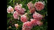 Чайковски - Валс от Спящата красавица - Roses Waltz