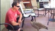 Разговор с гъска