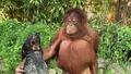 Най-неочакваните приятелства между животни