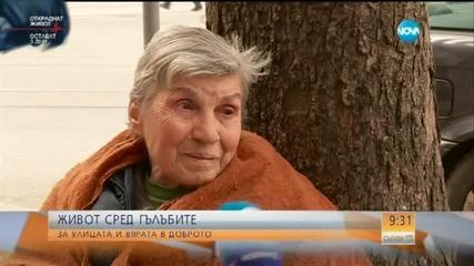 Живот сред гълъбите - историята на Величка Коцева