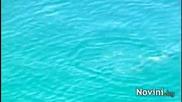 Гладни акули обсадиха австралийското крайбрежие