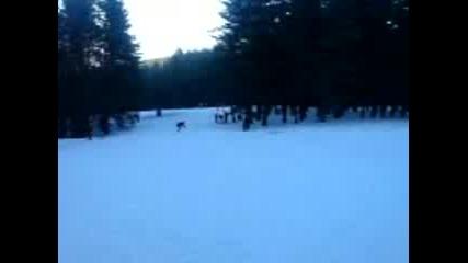 Snowboarding - Хижа Здравец