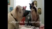 Най-откачената Компилация с Котки • Funniest Cats Compilation