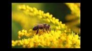 Лекция 2 - За Кучето , Котката и Пчелата ...