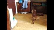 Куче И Коте - Сара И Уини 2
