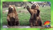 Животните си избухват яко - Много смях