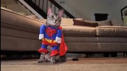 Котешки костюми за парти.