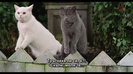 Г-ца Минус - филм с много котки в главните роли - (3 от 3)