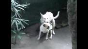 Много Смях Кучета Се Плющят