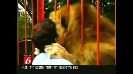 Лъв прегръща жена която го е спасила