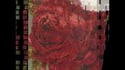 Mini Red Rose - Artecy