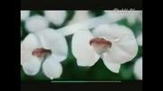 Реклама - Sprite