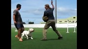 Dogo Argentino Control Work and Attack on Handler