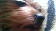 моето куче си плези езика :D