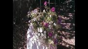 Цветята-спомен от лятото