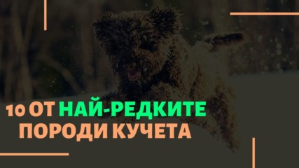 10 от най-редките породи кучета
