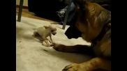 Според вас кой е по-големия звяр ?